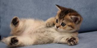kucing dimakan hidup hidup di kemayoran